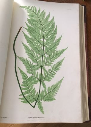 THE FERNS OF GREAT BRITAIN AND IRELAND. Nature-printed By Henry Bradbury.