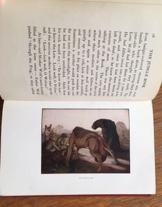 THE JUNGLE BOOK. With illustrations in colour by Maurice and Edward Detmold.