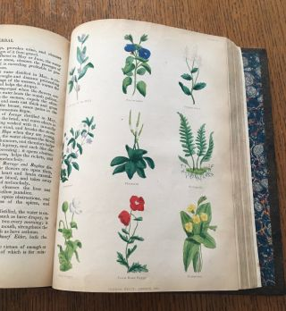 THE COMPLETE HERBAL. to Which is Now Added, Upwards of One Hundred Additional Herbs......